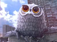 Owl (2x)