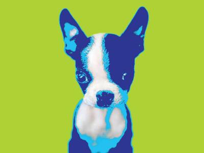 Diggy puppy colors neon pop art illustration photo little cute pet dog boston terrier boston