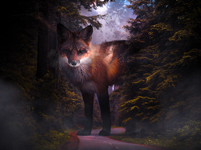 LOST stare photomanipulation photoshop composite giant forest digital art surrealism fox