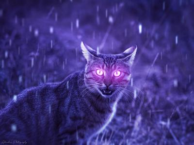 Awakened Catto rain animal cat wizard magic fantasy art composite surreal abstract photoshop night colorful design beautiful