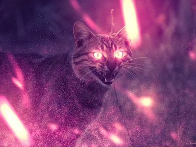 Zozo photoshop photoshop art wizard surreal cat animal magic fantasy art abstract composite night design colorful beautiful