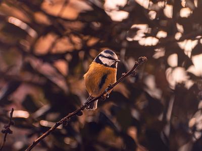 Floofball zoom photographer sunset dawn animal cute bokeh wildlife bird photography colorful beautiful