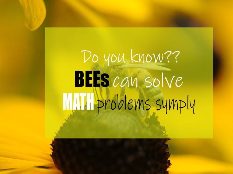 Bees can Solve Simple Math Problems design healthcare photoshoot branding blog post bloggers