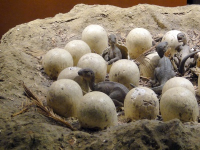The first dinosaur eggs were as soft as tortoise eggs. ancient photoshoot branding blog post bloggers