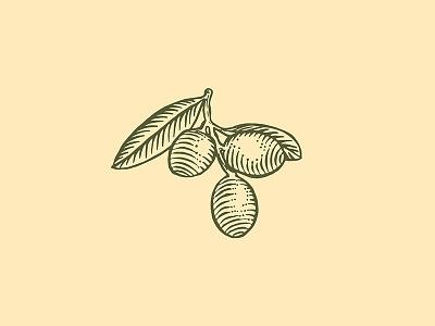 Olives illustration premium engraving olive vintage illustration design