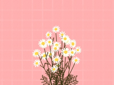 aesthetic daisy illustration