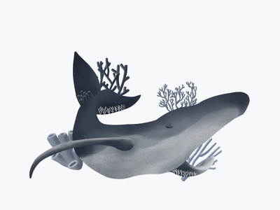 coral whale illustration