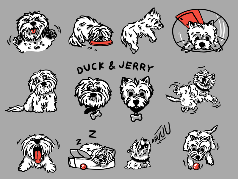 DUCK & JERRY procreate illustration westhighlandwhiteterrier cotondetulear cute drawn cartoon mishax mishaxgraphic character sketch woof dog emoji emotions stickers