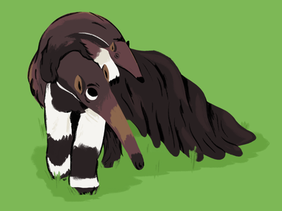 Anteaters character cartoon child animal procreate drawn anteater