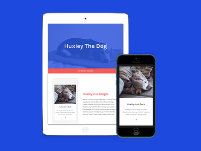 Huxley The Dog