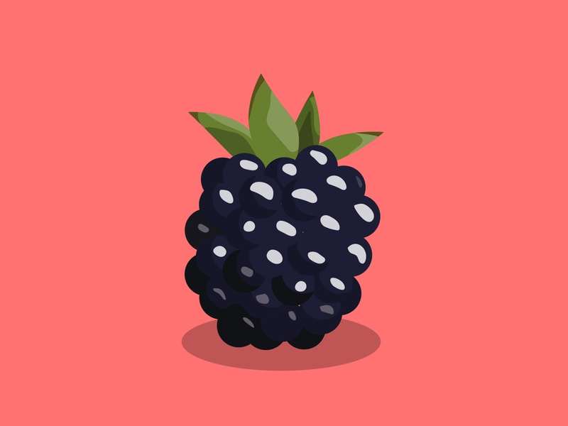 Blackberry Illustration blackberry fruit dark blue pink illustration colors drawing art vector vectorart minimalism digital adobe illustrator adobe illustrator design graphic graphicdesigns