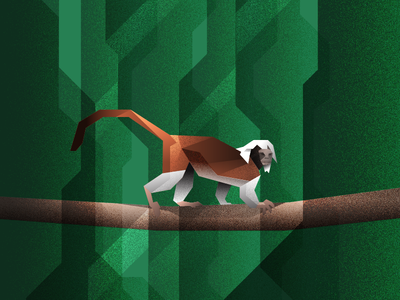 100 Day Project - Day 34: Cottontop Tamarin