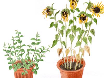 Dri plant