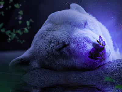 Purple polar  bear nepal design photos photo photography panda poster save the planet pidus photo magic posterdersing poster logoart artist butterfly logo butterfly animeal panda photomanupulation photoshop