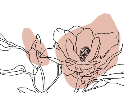 magnolia line art contour line art magnolia pink isolated illustration hand drawn digital art design