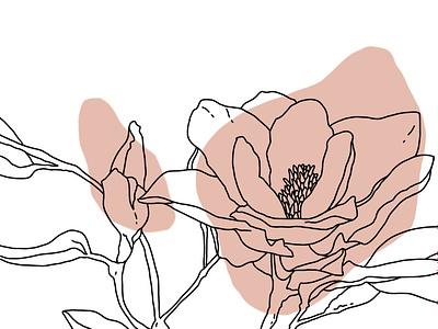 magnolia line art contour line art magnolia pink isolated illustration hand drawn digital art design