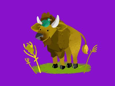 Buffalo for The Dodo
