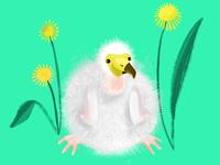 Fluffy for Illustration Friday