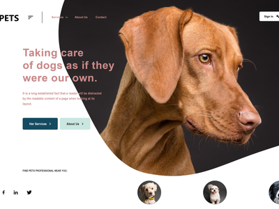 UI for a pets website website design webdesign website logo web design design illustration landing page design landing page landingpage landing design adobe xd adobexd
