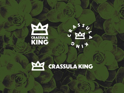 CRASSULA KING
