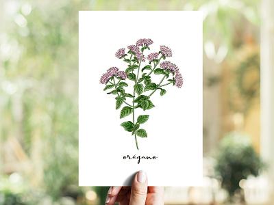 Oregano | Orégano illustration aromatic herb copicmarkers copics herb oregano