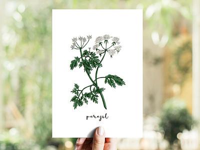 Parsley | Perejil illustration markers copicmarkers copic herb perejil parsley