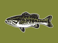Guadalupe Bass Illustration