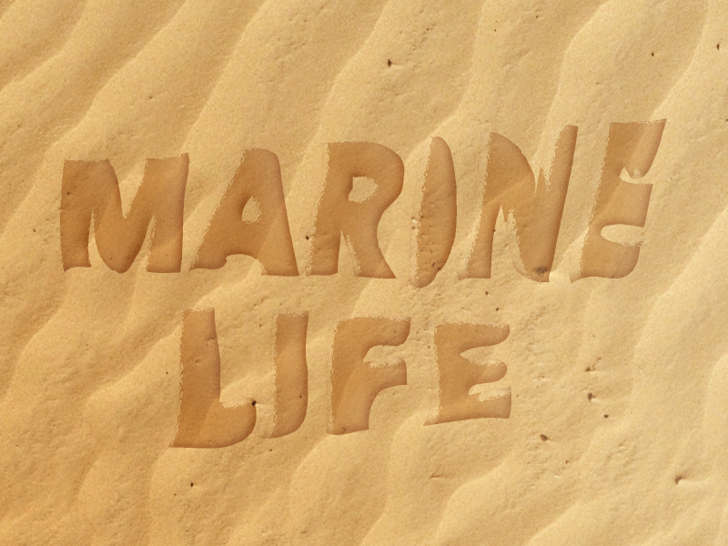 Marine life pilot logo