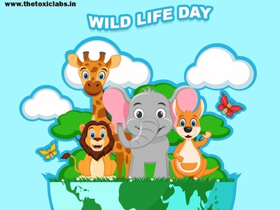 wild life day vector ui ux design socialmedia poster design illustration photoshop graphicdesign