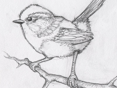 Wren sketch