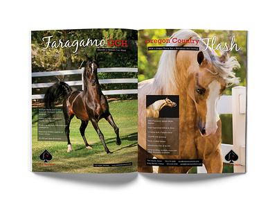 Stolen Aces Farm Magazine Ad #1 typography editorial design magazine ad advertising branding