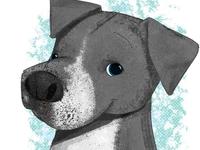 #adoptadoodle project -Ava - Tuff Tails Rescue - LI, NY