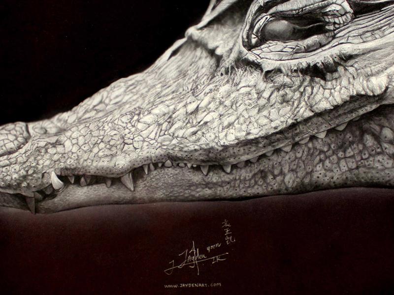 Crocodile - Chalk & Charcoal crocodile jaydenart black white chalk charcoal