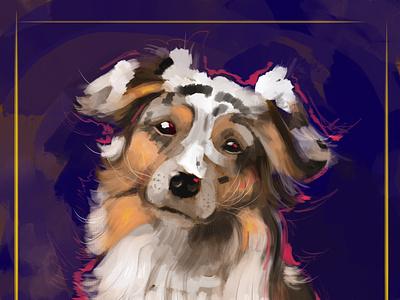 aussie shepherd dog illustration australian dog doggo postrait photoshop digital portrait digital painting digitalart illustration