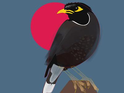 myna paths bird illustration birds myna bird art flatdesign photoshop digital portrait digital painting digitalart illustration
