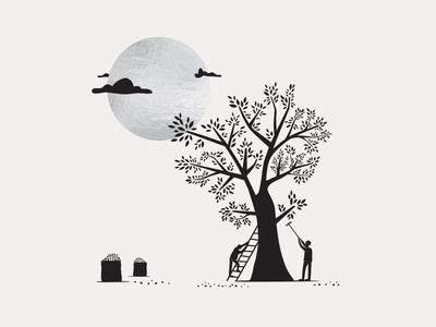 Olives harvest greek illustration design kommigraphics