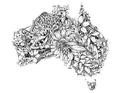 Australia Native australia nature botanical illustration drawing floral surface design botanical pattern illustration