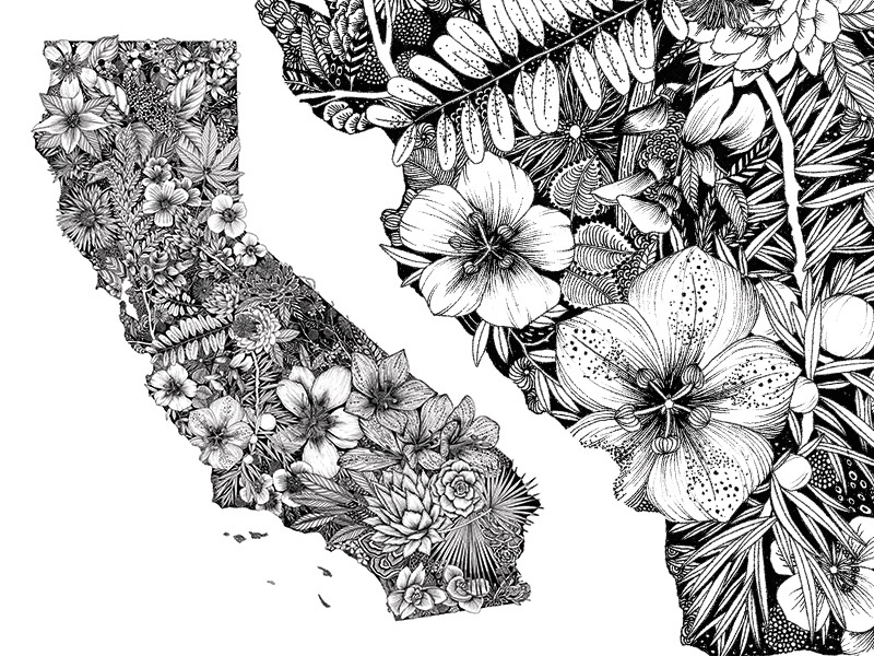 California Native Plants detail intricate black and white california nature flowers botanical illustration