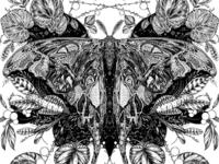 Hercules Moth Digital Illustration