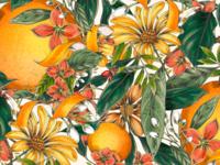 Orange Twist Illustrated pattern