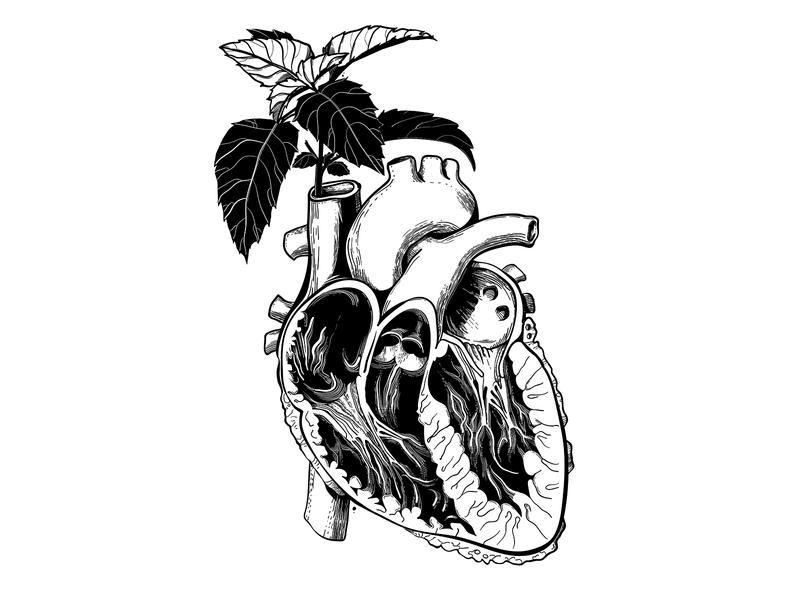 Basil heart anatomy medicine blackandwhite heart basil vector art vector illustration