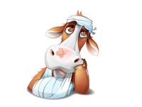 Sad Cow in bandage