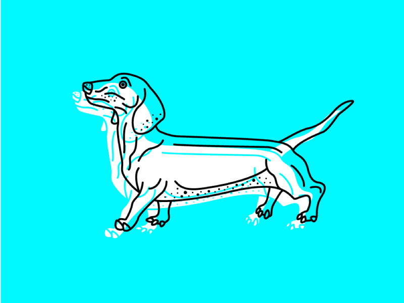 WALT animal walter wiener dog puppy vector illustration dog