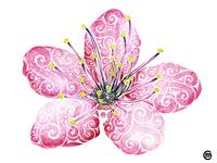 Swirly Cherry Blossom