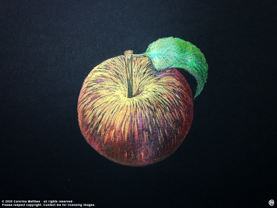 Apple black paper painting traditional shimmering ink apple fruit brandnew drawing ink illustration