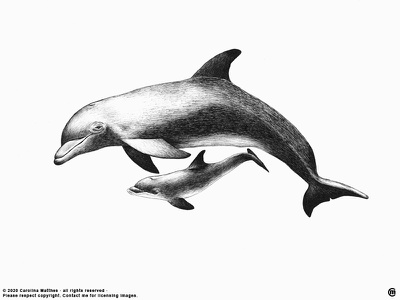 Dolphin Family dribbble beach sea inklove traditional art ink pen dolphin baby dolphin family ocean dolphins brandnew art animals drawing ink illustration