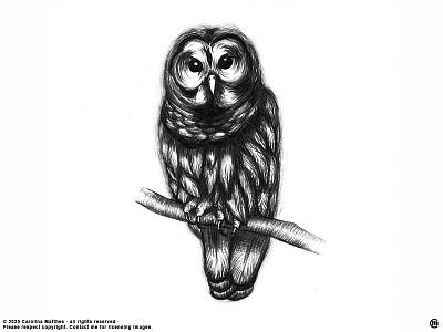 Owl graphite quick sketch rough illustration rough sketch sketch doodle brandnew art animals drawing illustration