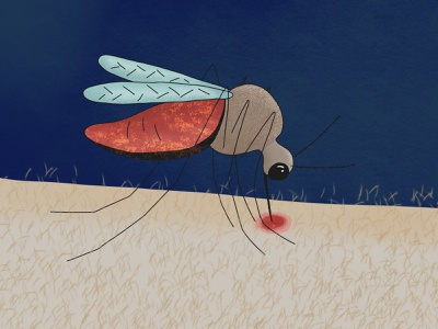 The one who bites you at night insect drawing insect texture in illustration illustration hand mosquito bite art blood mosquito drinks blood illustrations to order illustrator digital art illustration mosquito art mosquito mosquito