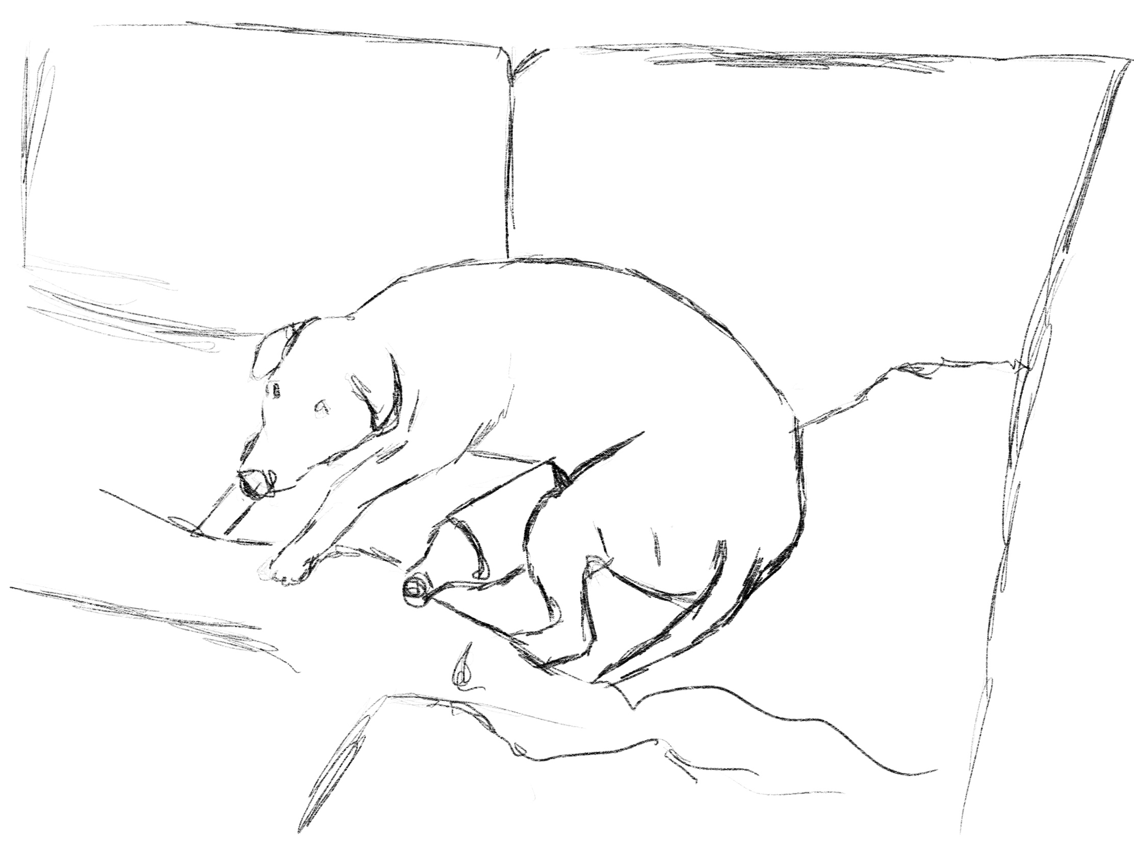 Dog's are challenging to draw 🙈 pro create dog sketch