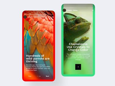 Mobile App - NatGeo Stories photo colorful mobile-ui user-interface clean design ux ui mobile app